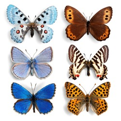 Stuffed insects Butterflies collection set
