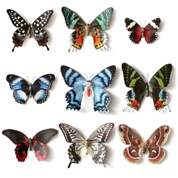 Stuffed insects Butterfly collection set