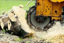 Stump Grinding a Tree Trunk