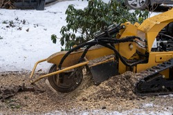 Stump grinding with a view from the right where the cutting disc is visible in close proximity. During the grinding process, the stump shavings fly through the air.