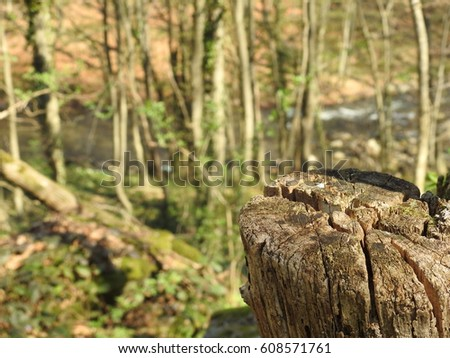 Stump in the woods #608571761