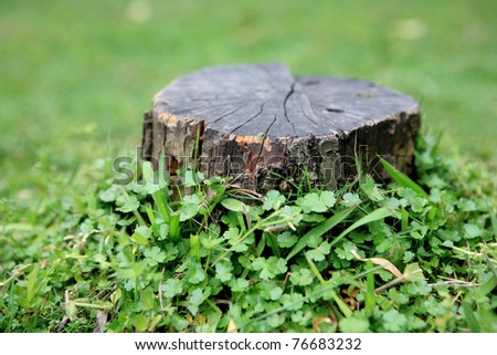 stump of the birch lying in the grass
