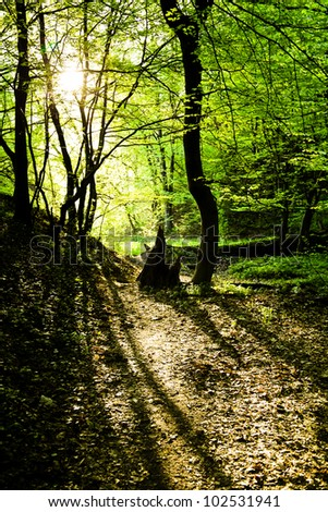 Stump on a forest path - stock photo