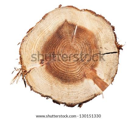 Stump on a white background