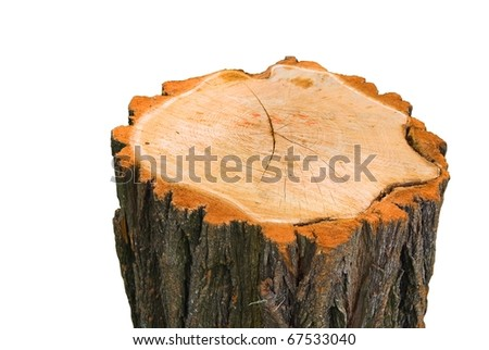 stump on a white background
