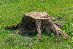 stump on green grass or graden