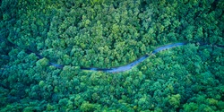 Stunning aerial view of road with curves crossing dense forest in summer colors - Northern Cross-Island Highway birds eye view use the drone in morning, shot in Yilan, Taiwan.