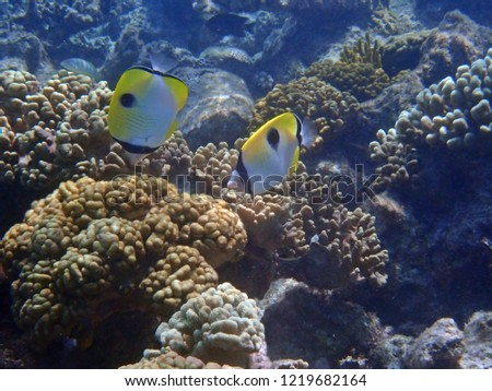 Stunning beauty of Great Barrier Reef under water diving #1219682164