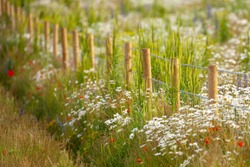 Stunning flower meadow lined with a rustic wooden fence in spring time in Norfolk UK. Shallow depth of field effect
