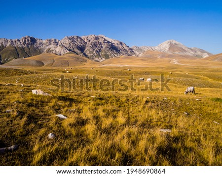 Stunning landscape with grazing cows in the meadows of Campo Imperatore valley, Gran Sasso National Park, Abruzzo region, Italy  Foto stock ©