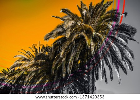 Stunning palm trees with overlay digital effect as sunset. Summer heat, beach, tropical nature photo for poster, print, design, surface, cover. Beautiful nature landscape for interior decorating, web