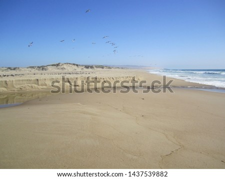 Stunning remote beach on the Central California coast off the Pacific Ocean. Birds flying and roaming the beach and shoreline on a bright sunny day.