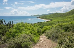 Stunning trail through the coastal flora and cactus on the east end of St. Croix with view over Grapetree Bay and rolling landscape in the US Virgin Islands