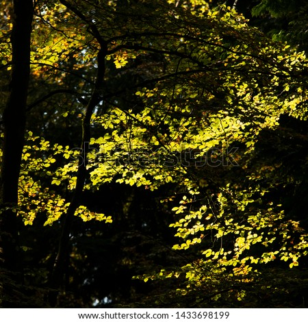 Stunning vibrant Autumn Fall trees in Fall color in New Forest in England with beautiful sunlight making colors pop against dark background #1433698199