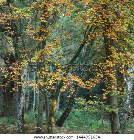 Stunning vibrant Autumn Fall trees in Fall color in New Forest in England with beautiful sunlight making colors pop against dark background #1444951634
