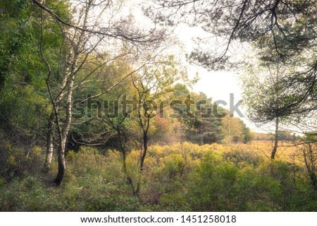 Stunning vibrant Autumn Fall trees in Fall color in New Forest in England with beautiful sunlight making colors pop against dark background #1451258018