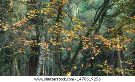 Stunning vibrant Autumn Fall trees in Fall color in New Forest in England with beautiful sunlight making colors pop against dark background #1470619256