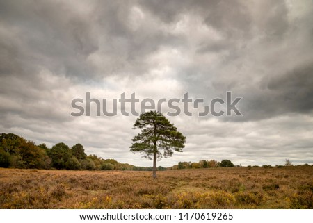 Stunning vibrant Autumn Fall trees in Fall color in New Forest in England with beautiful sunlight making colors pop against dark background #1470619265