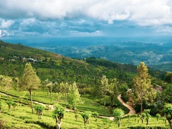 Stunning View From the Top of the Ceylon Tea Plantation Towards the Road Between Ella and Haputale, and Mountain in Sri Lanka