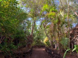Stunning view of park alley between tropical plants and palm trees in botanical garden park