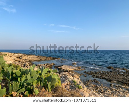 Stunning view of rocky coast, huge green opuntia cactus plants and Mediterranean sea landscape in golden sunset time on Sicily Island, Italy Foto stock ©