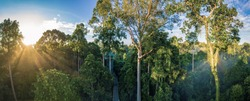 Stunning view of Tropical Rainforest in the morning sunrise with the Canopy Walk or Birding's Tower In Sepilok, Borneo
