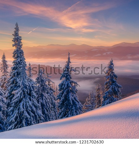 Stunning Winter Landscape with pine trees and colorful sky under sunlight, during sunset. Beautiful nature scene. Wonderful Christmas Background. Holiday concept. Wintry scenery with natural lightent #1231702630