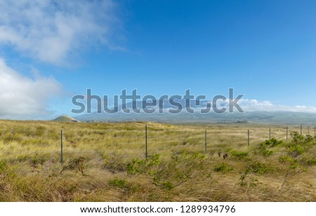 Stunning XXL panorama view of Mauna Kea volcano (4205 metres elevation) seen from Highway 190 near the town of Waimea on the Big Island of Hawaii, USA. Mauna Kea is a popular tourist destination. #1289934796