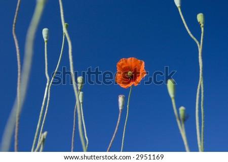 Style nature flower field closeup - stock photo