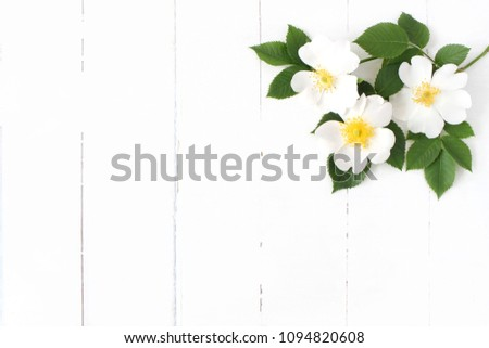 Styled stock photo. Feminine floral table composition with wild rose flowers on old white wooden background. Empty space. Top view. Picture for blog.