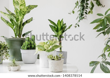 Stylish and botany composition of home interior garden filled a lot of plants in different design, elegant pots on the white table. White backgrounds walls. Green is better. Spring blossom. Template. #1408378514