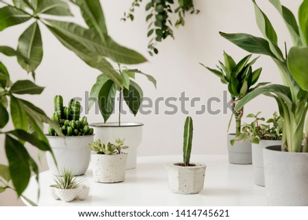 Stylish and botany composition of home interior garden filled a lot of plants in different design, elegant pots on the white table. White backgrounds walls. Green is better. Spring blossom. Template. #1414745621