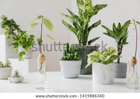 Stylish and botany composition of home interior garden filled a lot of plants in different design, elegant pots and avocado plants in glass bottles on the white table. Spring green blossom. Template. #1419886340