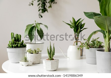 Stylish and botany composition of home interior garden filled a lot of plants in different design, elegant pots on the white table. White backgrounds walls. Green is better. Spring blossom. Template. #1419886349