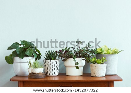 Stylish and botany composition of home interior garden filled a lot of plants in different design, elegant pots and air plants in on the brown retro table. Spring green blossom. Template. Minimalistic #1432879322