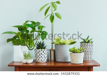 Stylish and botany composition of home interior garden filled a lot of plants in different design, elegant pots and avocado plant on the retro table. Gray backgrounds walls.  Spring blossom. Template. #1432879331