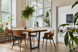 Stylish and cozy interior of dining room with design craft wooden table, chairs, plants, velvet sofa, poster map and elegant accessories in modern home decor. Template.