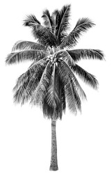 Stylish black and white palm tree with graphic shade fixer in white isolated background