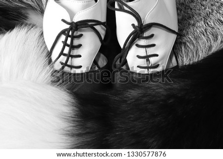 Stylish black and white photo with women's shoes with laces style 50-60 years shrouded in luxury, real fur silver black Fox. Tail silver black foxes white tip. Silver fox