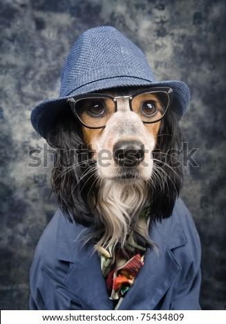 Stylish business dog - stock photo