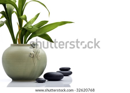 Stylish ceramic pot with bamboo leafs and stones