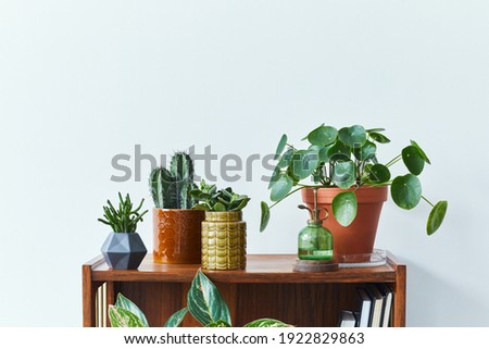 Stylish composition of home garden interior filled a lot of beautiful plants, cacti, succulents in different design pots. White wall. Copy space. Template. Home gardening concept Home jungle.