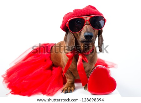 Stylish dog in fashionable red suit with glasses