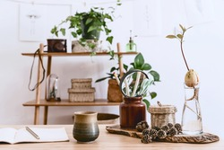 Stylish interior of home office space with wooden desk, forest accessories, avocado plant, bamboo shelf, plants and rattan decoration. Neutral home deco