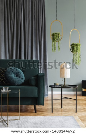 Stylish minimalistic interior of living room with design green velvet sofa, black coffee table, pillow, marble table lamp, hanging gold flowerbeds and elegant accessories. Eucalyptus color. Template.