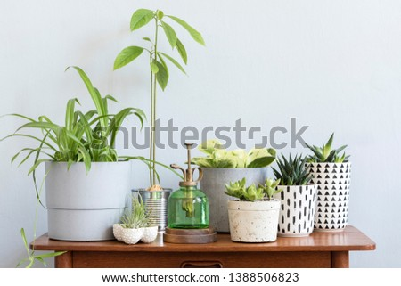 Stylish scandinavian interior with design commode and beautiful composition of plants in different hipster pots. Modern home decor. Gray background wall. Minimalistic concept. Template. Home garden. #1388506823