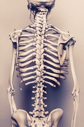 Stylized background  photo of back of human skeleton model - aged effect