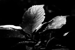 Stylized black and white flower with leaves on a public garden during summer with soft focus background