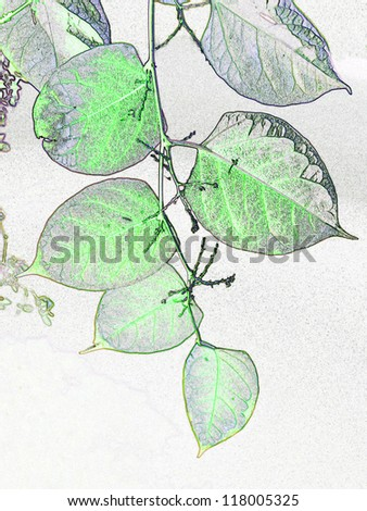 Stylized branch with leaves, illustration