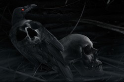 Stylized crow and skull composition. Photo of a black and white black stylized crow with skull image on a back, sitting with human skull close up composition with branch background pattern.
